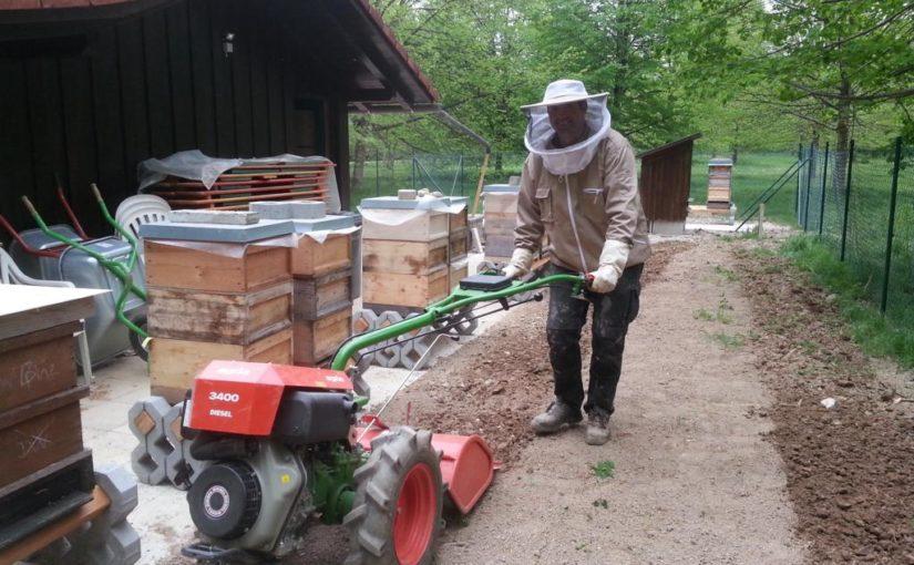 Wildblumensamen für den Lehrbienenstand