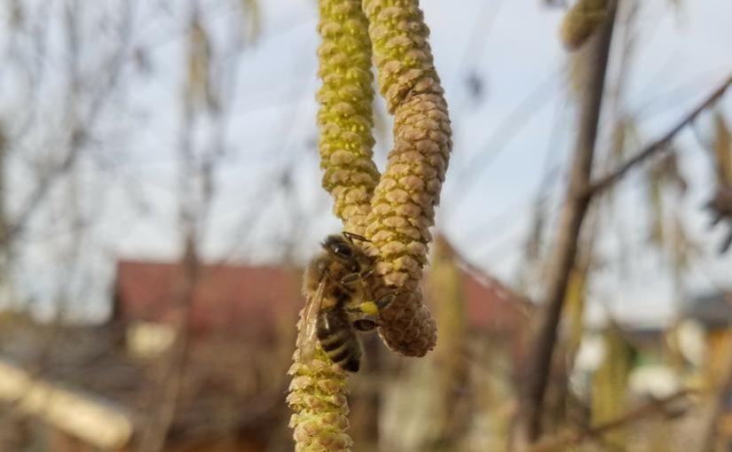 Frühlingserwachen am Lehrbienenstand